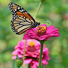 Butterfly at the Zoo by Allen  Freeman