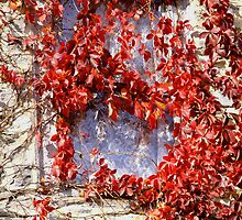 Lace Curtained Window by Hope Ledebur
