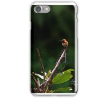 Rufus Humming Bird iPhone Case/Skin