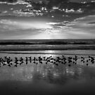 Seagulls at sunset by Carlos Restrepo