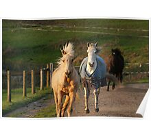Get outta my way.. i am one hungry horse Poster