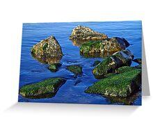 Coastal Green Algae ~ Lyme Regis Greeting Card