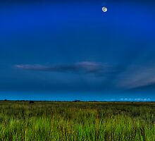 Moon over the Glades by Gilbert Laraque