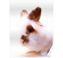 White bunny with coffee bean dots Poster