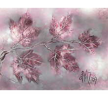 February Amethyst Maples Photographic Print