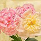 Divine Pink & White Peonies by daphsam