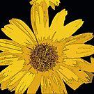 Yellow Daisy Mae by Dmarie Frankulin