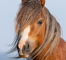 Welsh Wild Pony by iajon