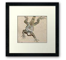 iguana2 Framed Print