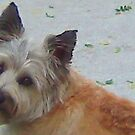 Sad doggy eyes.. by Kendra Taber