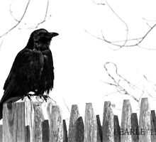 Crow on a Fence  by Pearle