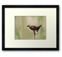 sparrow 1 2015 Framed Print