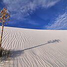 White Sands Yucca by B Spencer