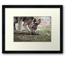 Must be hungry Framed Print