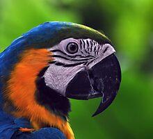Macaw- Sentosa Butterfly House, Singapore. by Ashton Doyle