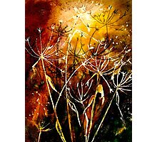 FireWorks.... Photographic Print