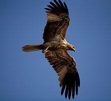 birds #100, golden spread by stickelsimages