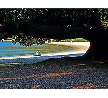 Beach Tree Photographic Print