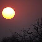 Sunrise Chobe NP by Steve Bullock