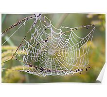 Web in Tall Grass Poster