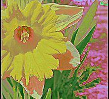 Daffodil by Pearle