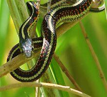 Sneaky Snake by tkrosevear