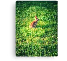 Bunny In Grass Canvas Print