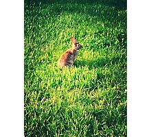 Bunny In Grass Photographic Print