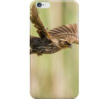sparrow 2  2015 iPhone Case/Skin
