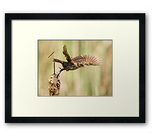 sparrow 2  2015 Framed Print