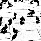 Pigeon Party by Scott Anderson