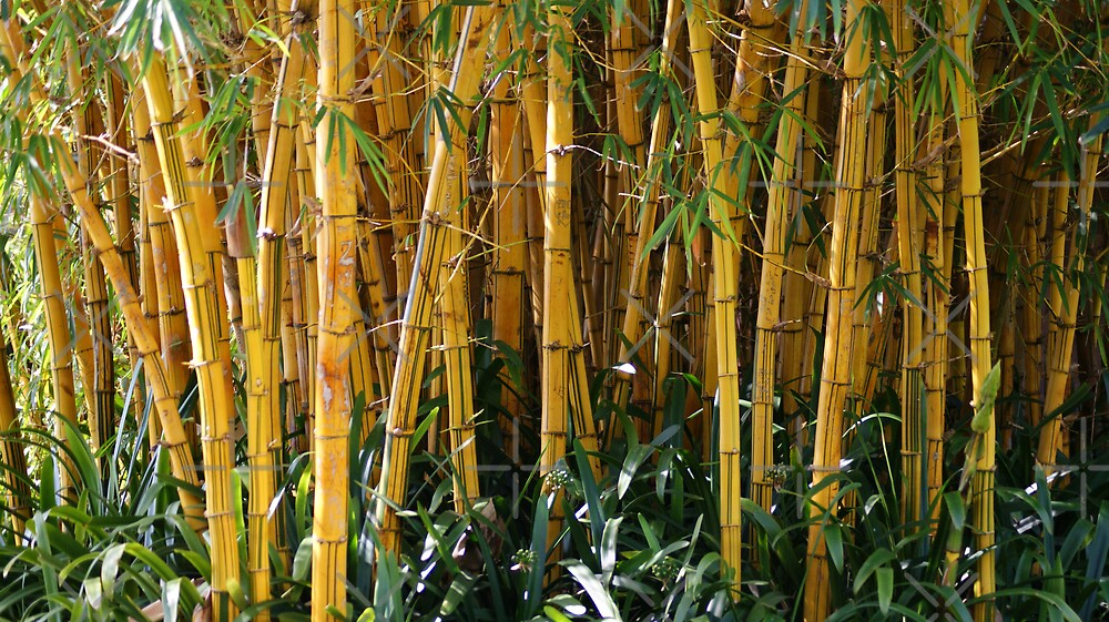 bamboo curtain by Steven Guy