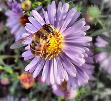 A Honey Bee by naturelover