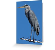 The Heron Greeting Card