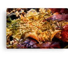 Colourful Seaweed - Lyme Regis Canvas Print