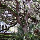 Live Oaks, St. Augustine by BCallahan
