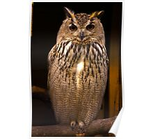 Owl #2 Poster