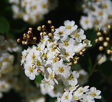 May in April (2) by lezvee