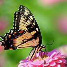 A FLOWER ROMANCE -IV-  by mc27