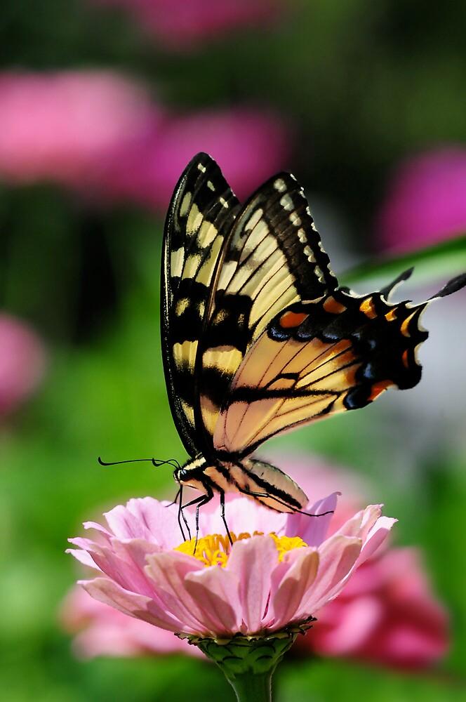 A FLOWER ROMANCE -V-  by mc27