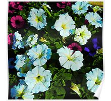 Petunia Party, colorful flowers, floral art Poster