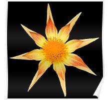 Yellow Star Dahlia Poster