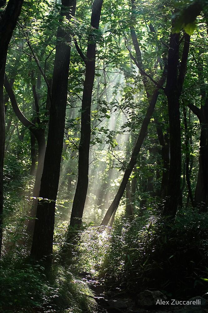 Forest Rays - Gayasan National Park, South Korea by Alex Zuccarelli