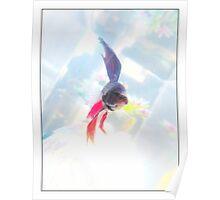 The Fish Betta Fish Poster