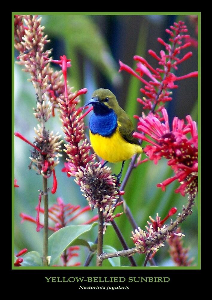 Sunbird by Holly Kempe