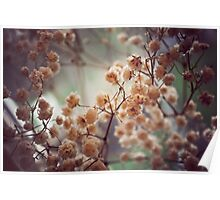 Soft Flowers Poster