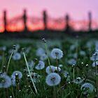 Evening Calm by AbigailJoy
