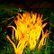 Nature's Delight for Bonfire Night