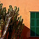 The cactus and the shutters by Barbara  Corvino
