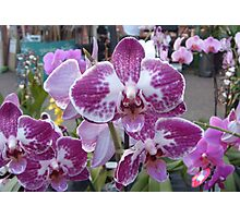 More Orchids Photographic Print
